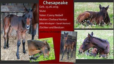 Chesapeake 2