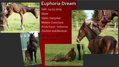 Euphoria Dream