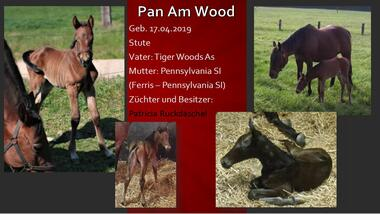 Pan Am Wood